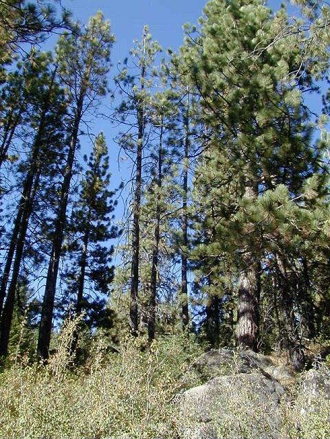 Image for 13052 Donner Pass Road, Truckee, CA 96161