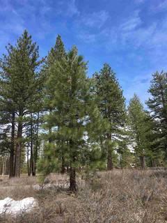 Listing Image 2 for 12652 Caleb Circle, Truckee, CA 96161