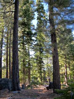 Listing Image 5 for 2535 N Summit Place, Truckee, CA 96161