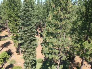 Listing Image 13 for 9256 Heartwood Drive, Truckee, CA 96161