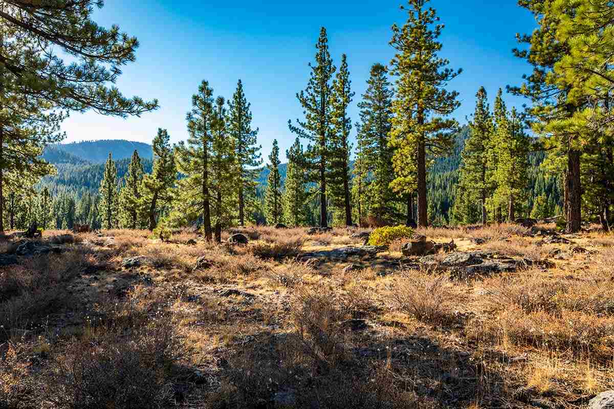 Image for 8155 Valhalla Drive, Truckee, CA 96161