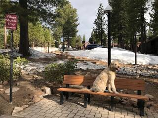 Listing Image 21 for 6072 Rocky Point Circle, Truckee, CA 96161