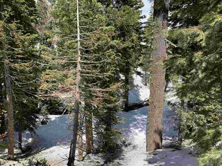 Listing Image 8 for 1378 Mineral Springs Trail, Alpine Meadows, CA 96146