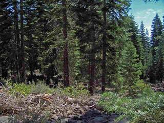 Listing Image 5 for 11612 Lockwood Drive, Truckee, CA 96161