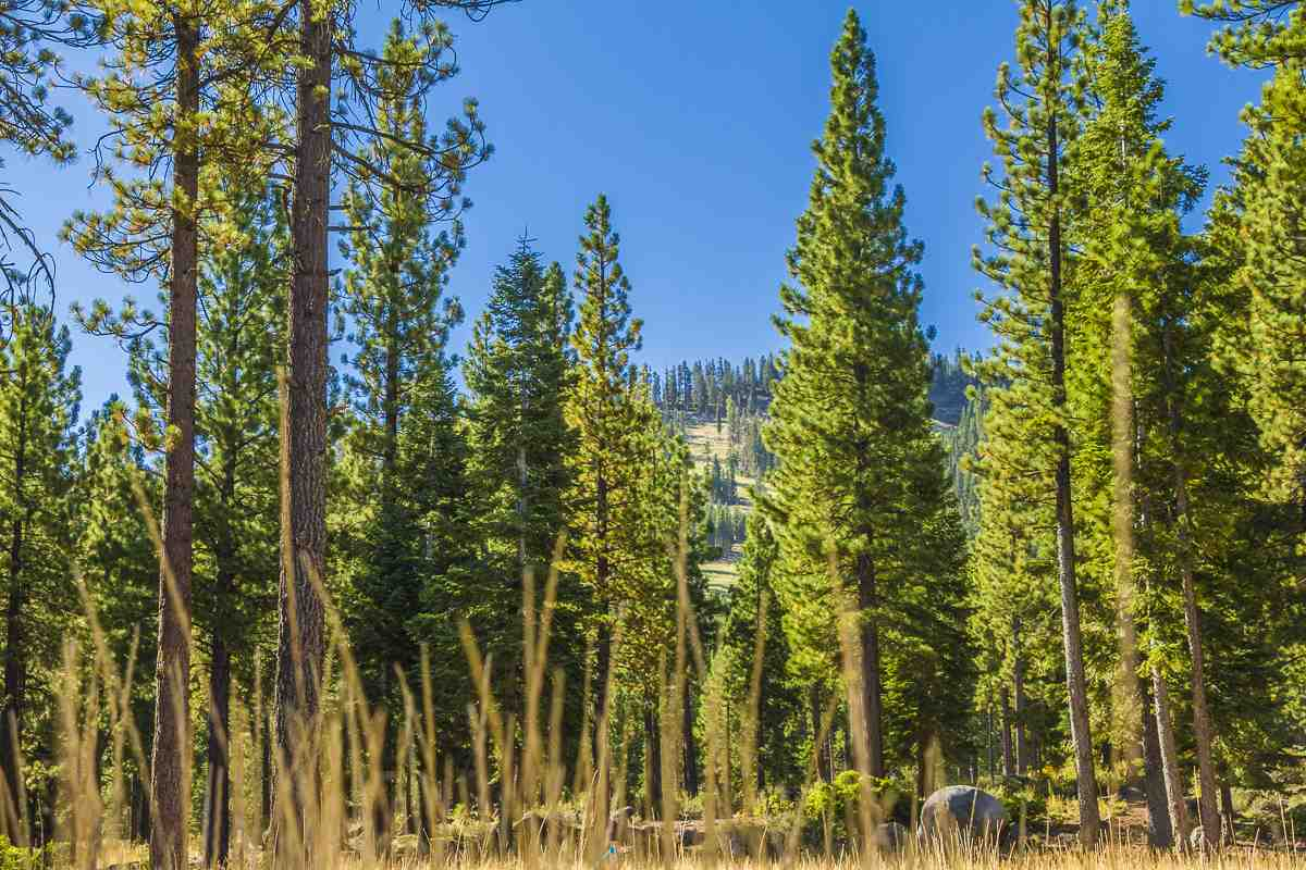 Image for 9535 Dunsmuir Way, Truckee, CA 96161