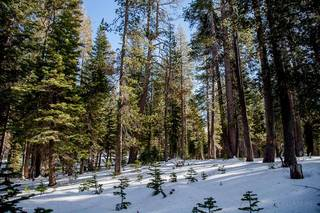 Listing Image 14 for 0 Old Donner Summit Road, Norden, CA 95724