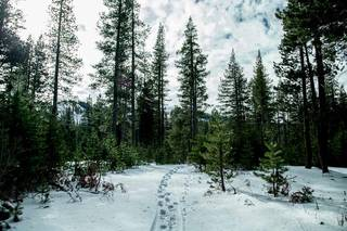 Listing Image 9 for 0 Old Donner Summit Road, Norden, CA 95724
