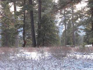 Listing Image 2 for 12885 Caleb Drive, Truckee, CA 96161