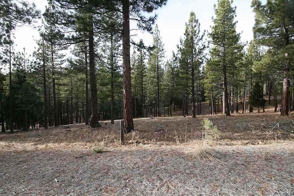 Image for 95 Big Grizzly Road, Portola, CA 96122
