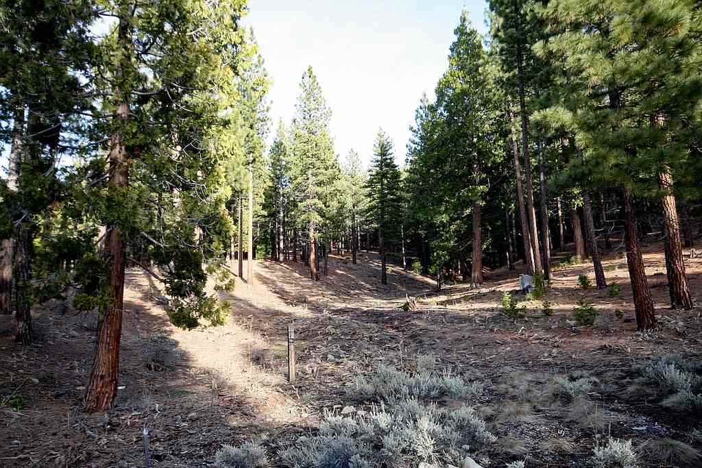 Image for 37 Whisker Brush Way, Portola, CA 96122