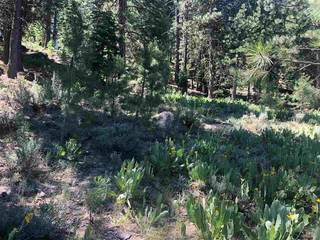 Listing Image 4 for 15653 Donnington Lane, Truckee, CA 96161