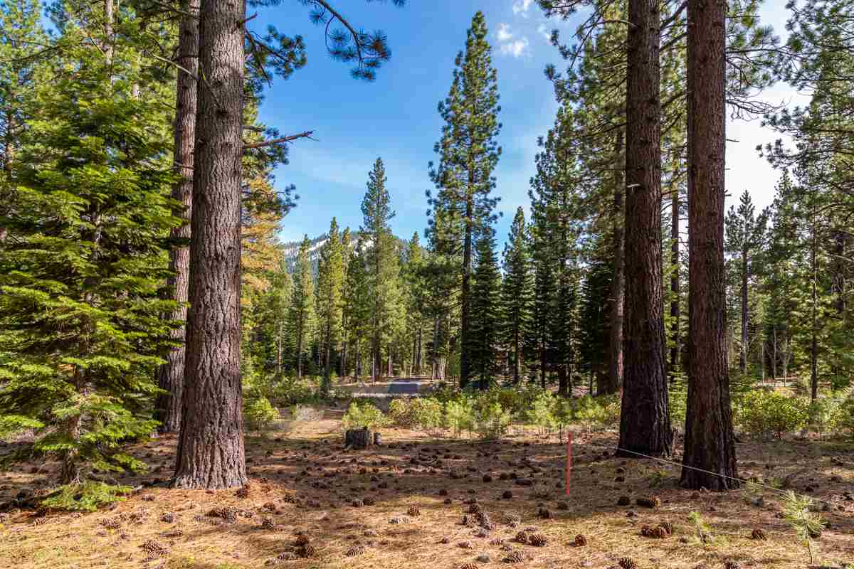 Image for 8507 Wellcroft Court, Truckee, CA 96161