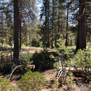 Listing Image 3 for 11711 Ghirard Road, Truckee, CA 96161-2771