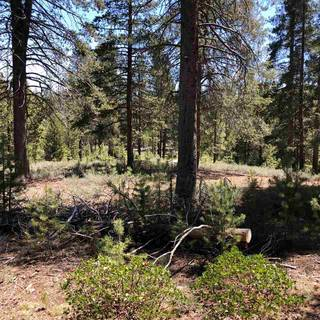 Listing Image 4 for 11711 Ghirard Road, Truckee, CA 96161-2771