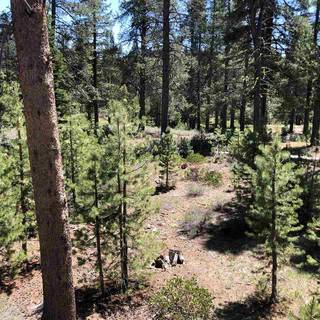 Listing Image 6 for 11711 Ghirard Road, Truckee, CA 96161-2771