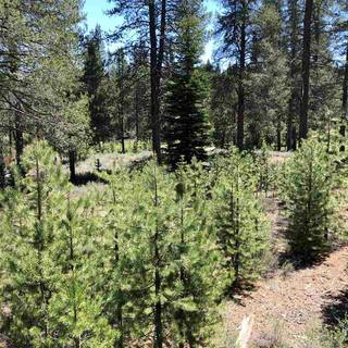 Listing Image 8 for 11711 Ghirard Road, Truckee, CA 96161-2771