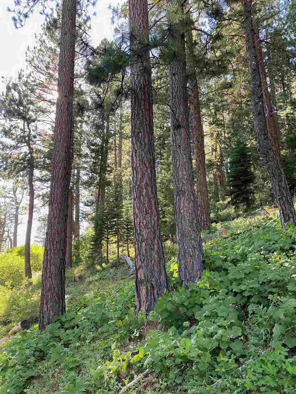 Image for 14935 Pioneer Drive, Truckee, CA 96161