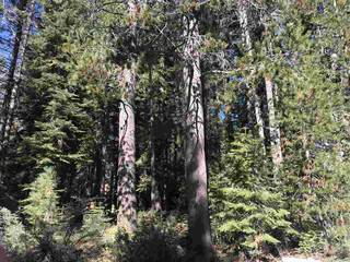 Listing Image 14 for 50912 Jeffery Pine Drive, Soda Springs, CA 95728