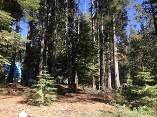 Listing Image 5 for 50912 Jeffery Pine Drive, Soda Springs, CA 95728