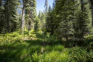 Listing Image 14 for Hampshire Rocks Road, Emigrant Gap, CA 95715