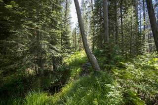 Listing Image 15 for Hampshire Rocks Road, Emigrant Gap, CA 95715