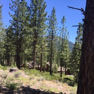 Listing Image 2 for 8632 Lloyd Tevis, Truckee, CA 96161