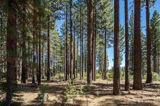 Listing Image 11 for 0000 Rue Ivy, Truckee, CA 96161