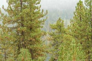 Listing Image 15 for 14687 E Reed Avenue, Truckee, CA 96161