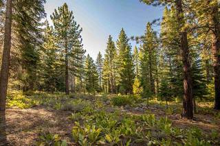 Listing Image 5 for 12228 Pete Alvertson Drive, Truckee, CA 96161