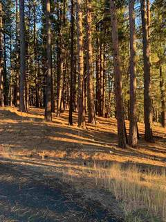 Listing Image 2 for 16397 Lance Drive, Truckee, CA 96161
