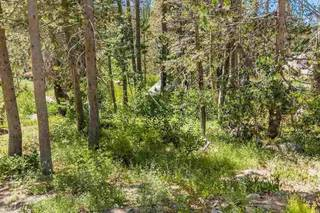 Listing Image 13 for 21685 Donner Pass Road, Soda Springs, CA 95728