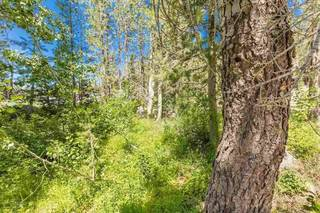 Listing Image 14 for 21685 Donner Pass Road, Soda Springs, CA 95728