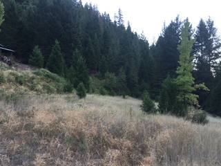Listing Image 3 for 420 Goodyears Creek Road, Downieville, CA 95936