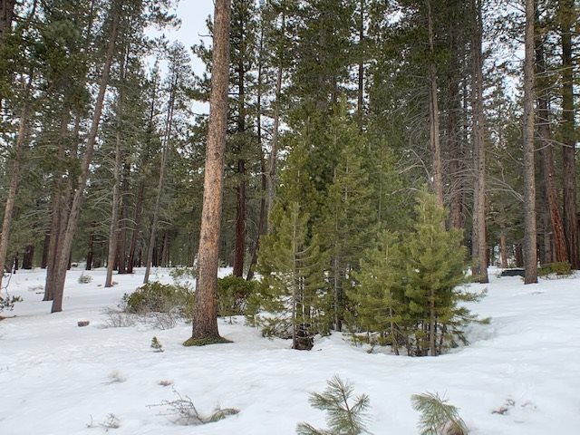 Image for 11820 Ghirard Road, Truckee, CA 96161