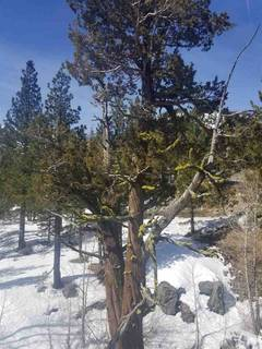 Listing Image 11 for 1432 Mineral Springs Trail, Alpine Meadows, CA 96161-1564