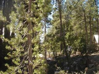 Listing Image 21 for 51037 Jeffery Pine Drive, Soda Springs, CA 95728