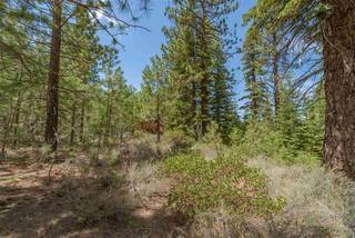 Listing Image 15 for 10336 Palisades Drive, Truckee, CA 96161