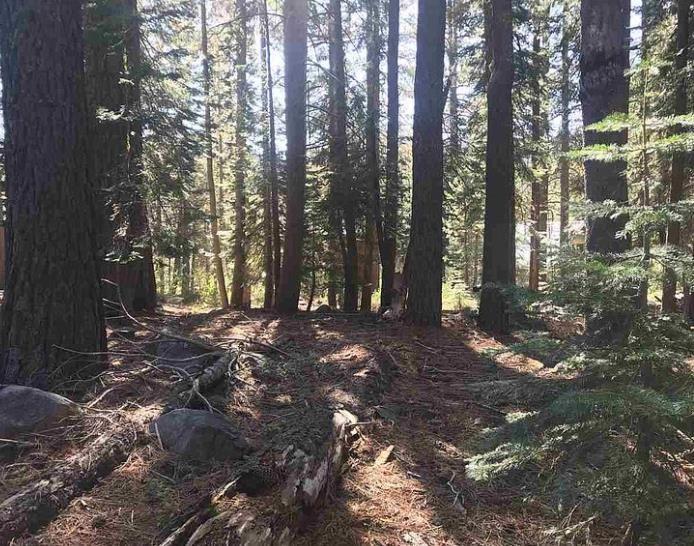 Image for 50912 Jeffery Pine Drive, Soda Springs, CA 95728