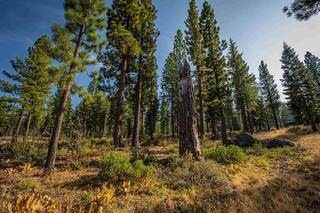 Listing Image 11 for 9523 Dunsmuir Way, Truckee, CA 96161