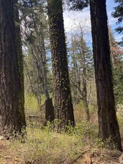 Listing Image 12 for 14660 Devils Peak Road, Truckee, CA 96161