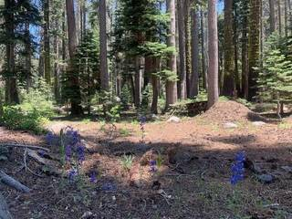 Listing Image 3 for 21164 Donner Pass Road, Soda Springs, CA 95728