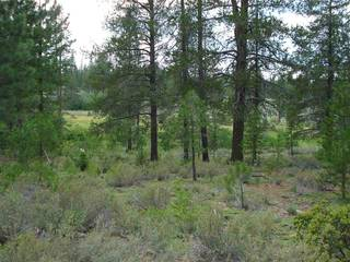 Listing Image 4 for 13207 Snowshoe Thompson, Truckee, CA 96161