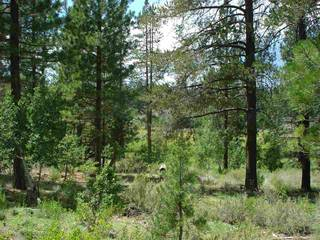 Listing Image 5 for 13207 Snowshoe Thompson, Truckee, CA 96161