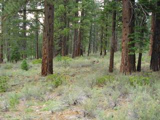 Listing Image 7 for 13207 Snowshoe Thompson, Truckee, CA 96161