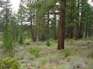 Listing Image 8 for 13207 Snowshoe Thompson, Truckee, CA 96161