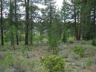 Listing Image 9 for 13207 Snowshoe Thompson, Truckee, CA 96161