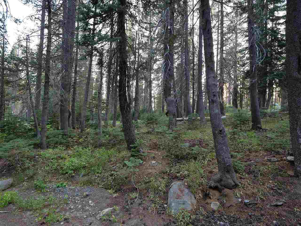 Image for 16 Bunny Hill Road, Soda Springs, CA 95728