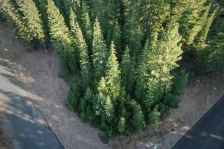 Listing Image 3 for 0 Brae Road, Truckee, CA 96161