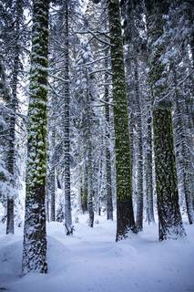 Listing Image 12 for xxxxx Alpine Meadows Road, Alpine Meadows, CA 96146-9837